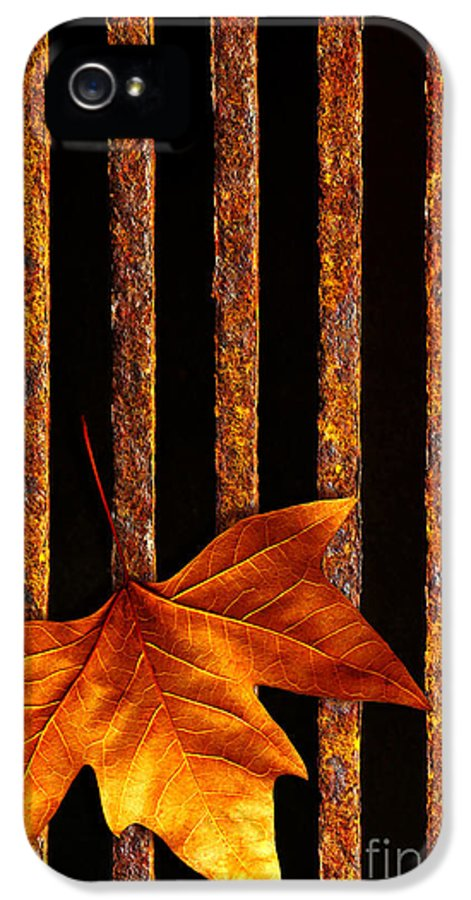 Abstract IPhone 5 Case featuring the photograph Leaf In Drain by Carlos Caetano