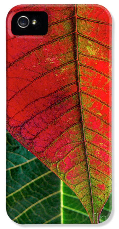 Autumn IPhone 5 / 5s Case featuring the photograph Leafs Macro by Carlos Caetano