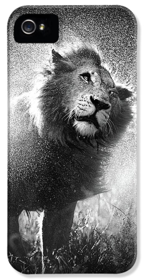 Lion IPhone 5 Case featuring the photograph Lion Shaking Off Water by Johan Swanepoel