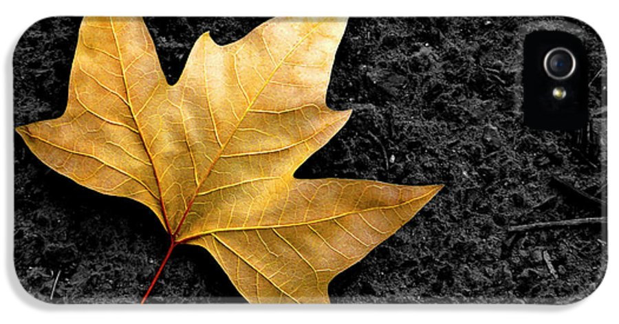 Asphalt IPhone 5 Case featuring the photograph Lone Leaf by Carlos Caetano