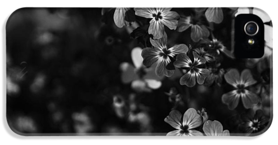 Uc Berkeley Botanical Garden IPhone 5 Case featuring the photograph Love Lost by Laurie Search