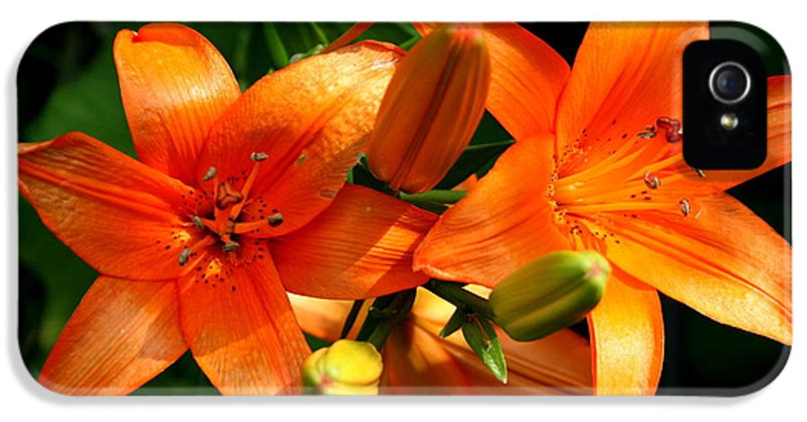 Lily IPhone 5 Case featuring the photograph Marmalade Lilies by David Dunham