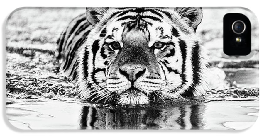 Tiger IPhone 5 Case featuring the photograph Mike by Scott Pellegrin