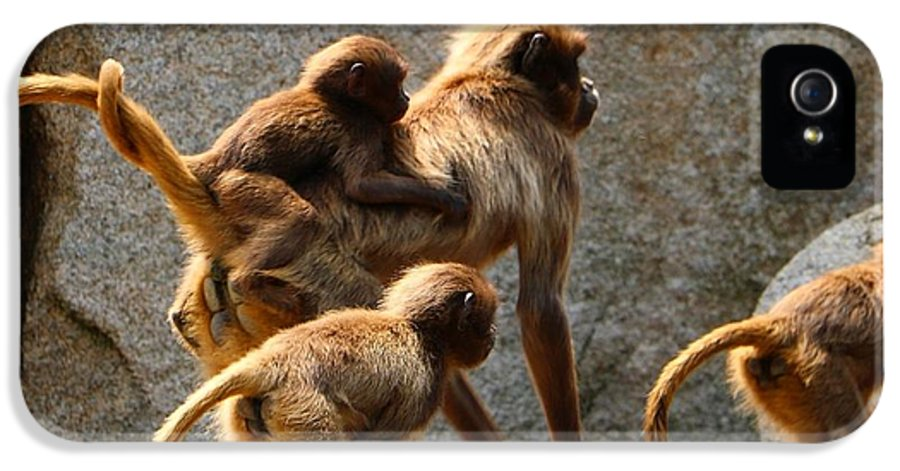 Animal IPhone 5 Case featuring the photograph Monkey Family by Dennis Maier