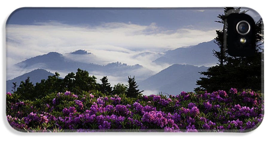 Roan Mountain IPhone 5 Case featuring the photograph Morning On Grassy Ridge Bald by Rob Travis