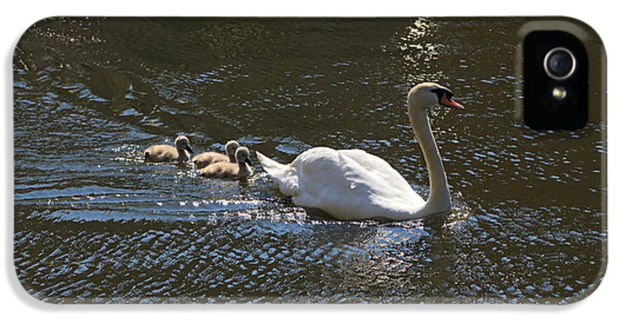 Swans IPhone 5 Case featuring the photograph Mute Swan With Three Cygnets Following by Louise Heusinkveld