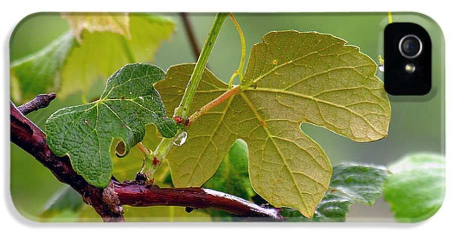 Grapevine IPhone 5 Case featuring the photograph My Grapvine by Robert Meanor