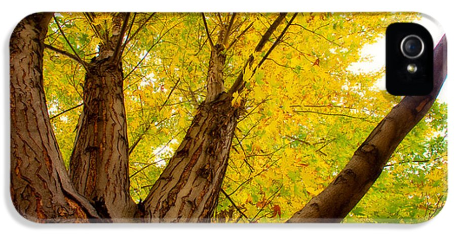 Tree IPhone 5 Case featuring the photograph My Maple Tree by James BO Insogna