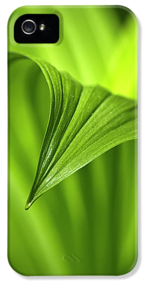 Nature IPhone 5 Case featuring the photograph Nature Unfurls by Christina Rollo