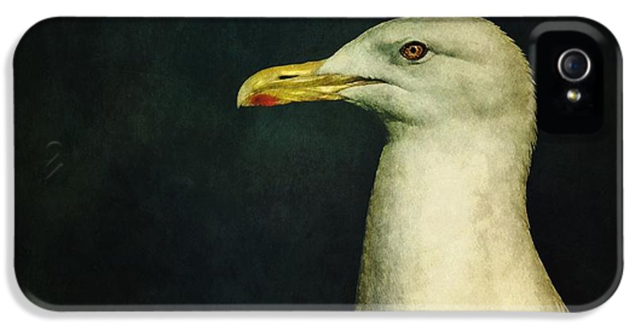 Seagull IPhone 5 Case featuring the photograph Naujaq by Priska Wettstein