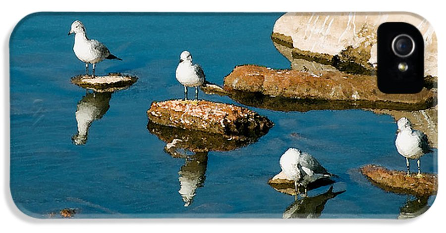 Seagull IPhone 5 Case featuring the photograph Non-conformist by Betty LaRue
