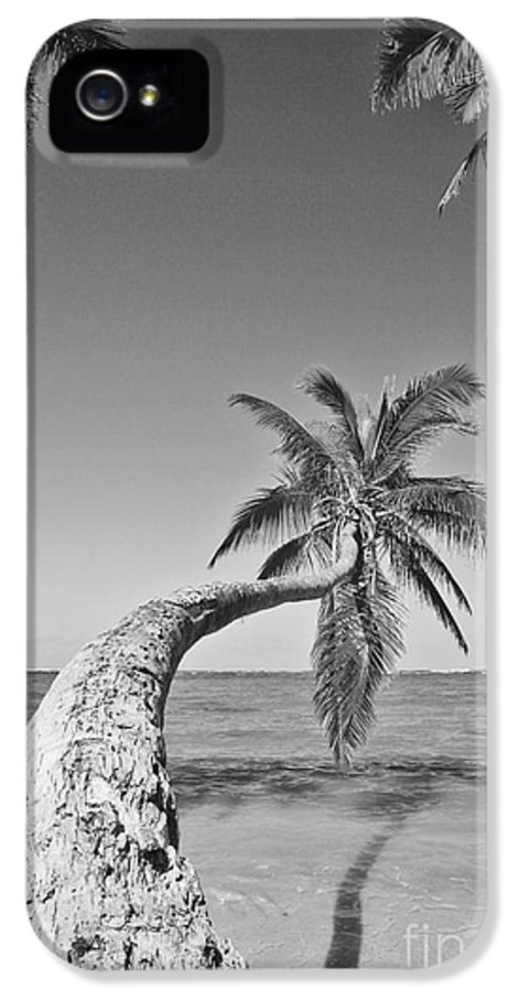 Afternoon IPhone 5 Case featuring the photograph Oahu Palms by Tomas del Amo - Printscapes