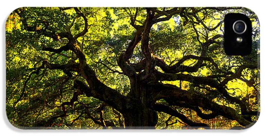 Angel Oak IPhone 5 Case featuring the photograph Old Old Angel Oak In Charleston by Susanne Van Hulst