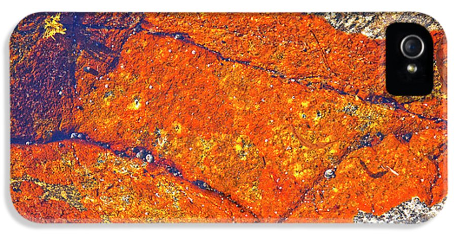 Lichen IPhone 5 Case featuring the photograph Orange Lichen by Heiko Koehrer-Wagner