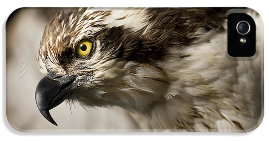 3scape Photos IPhone 5 Case featuring the photograph Osprey by Adam Romanowicz