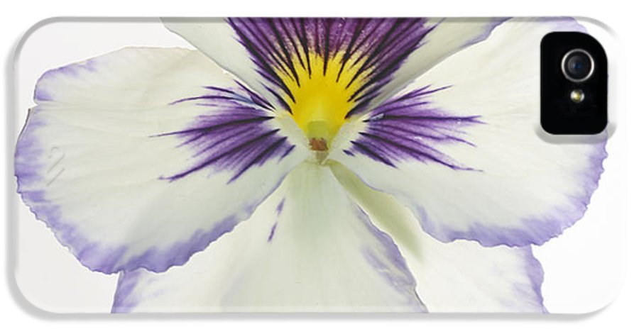 Pansy Genus Viola IPhone 5 Case featuring the photograph Pansy 2 by Tony Cordoza