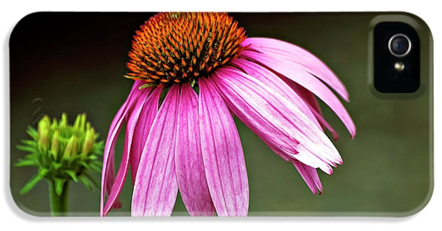 Flower IPhone 5 Case featuring the photograph Passages by Steve Harrington