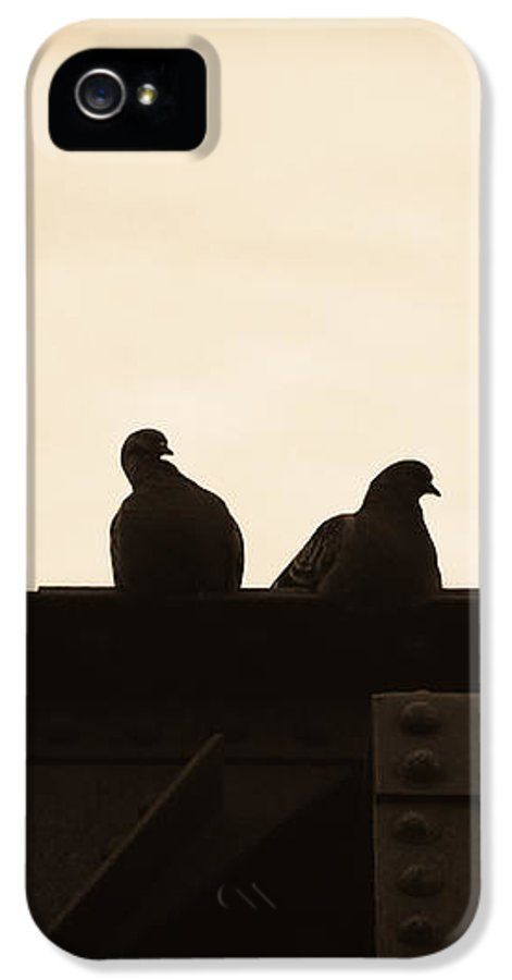 Silhouettes IPhone 5 Case featuring the photograph Pigeon And Steel by Bob Orsillo