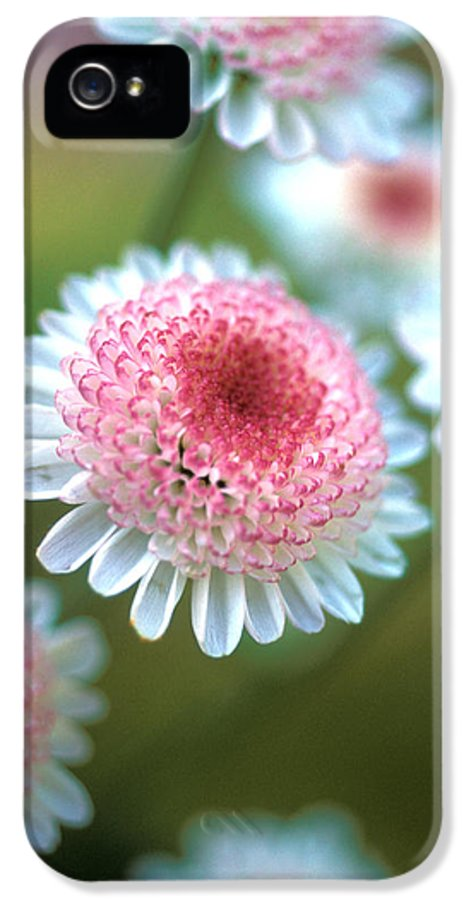 Florals IPhone 5 / 5s Case featuring the photograph Pincushion Flowers by Kathy Yates