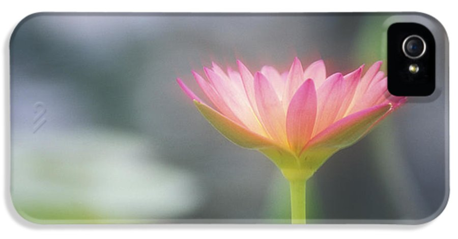 Afternoon IPhone 5 Case featuring the photograph Pink Water Lily by Ron Dahlquist - Printscapes