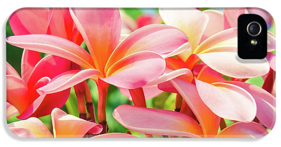 Plumeria IPhone 5 Case featuring the photograph Pua Melia Ke Aloha Maui by Sharon Mau