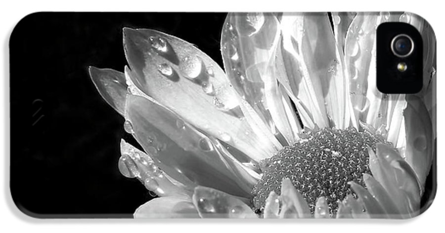 Daisy IPhone 5 Case featuring the photograph Raindrops On Daisy Black And White by Jennie Marie Schell