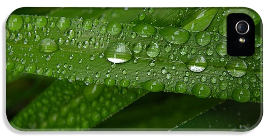 Rain IPhone 5 Case featuring the photograph Raindrops On Green Leaves by Carol Groenen