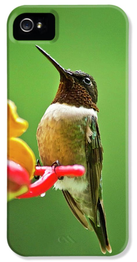 Hummingbirds IPhone 5 Case featuring the photograph Rainy Day Hummingbird by Christina Rollo