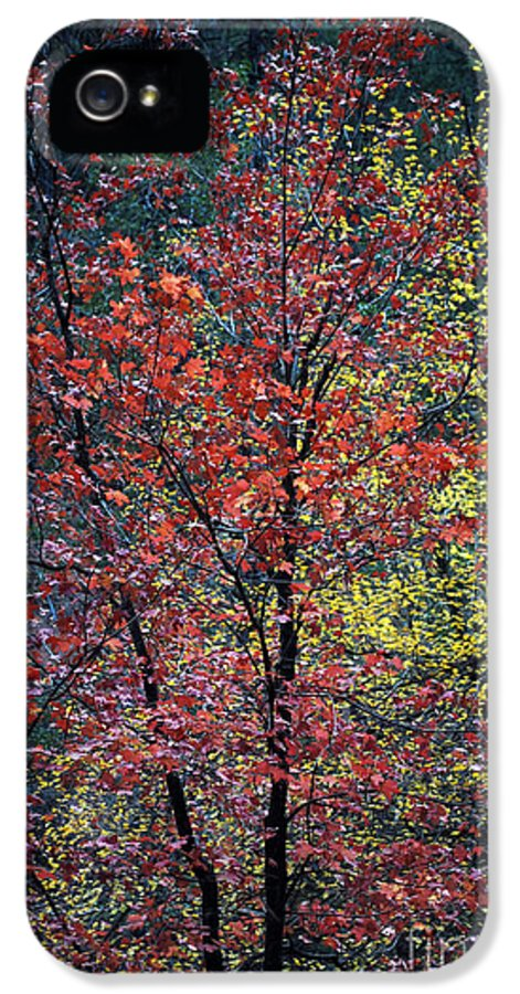 Landscape IPhone 5 Case featuring the photograph Red And Yellow Leaves Abstract Vertical Number 1 by Heather Kirk