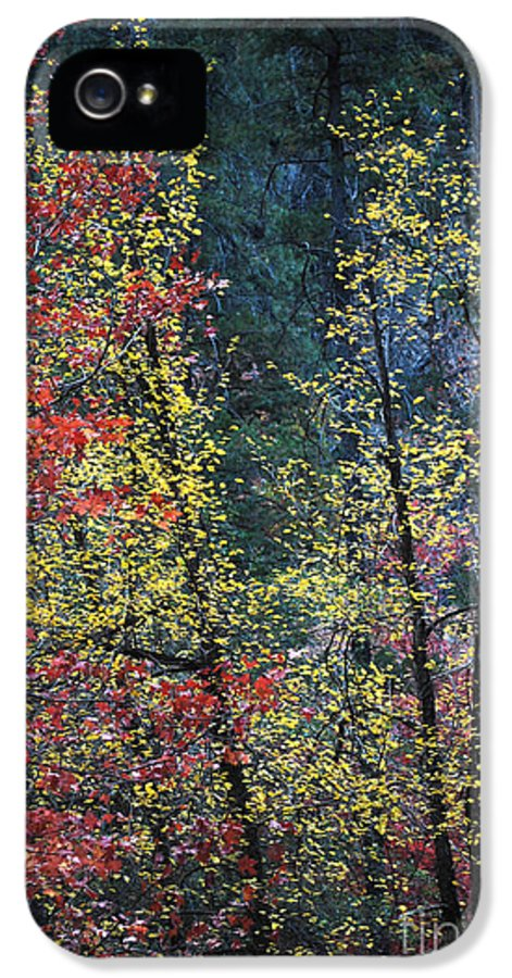 Landscape IPhone 5 Case featuring the photograph Red And Yellow Leaves Abstract Vertical Number 2 by Heather Kirk