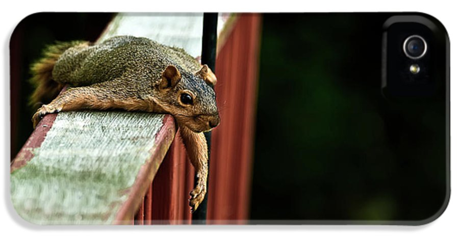 Eastern Fox Squirrel IPhone 5 Case featuring the photograph Resting Squirrel by Onyonet Photo Studios
