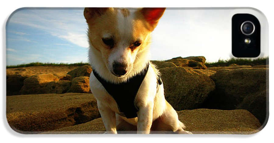 Dog IPhone 5 Case featuring the photograph Rock Climbing Rocko by Mandy Shupp