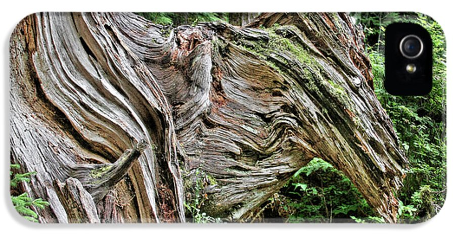 Trees IPhone 5 Case featuring the photograph Roots - Welcome To Olympic National Park Wa Usa by Christine Till