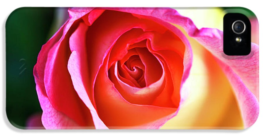 Rose IPhone 5 Case featuring the photograph Rose by John Rizzuto