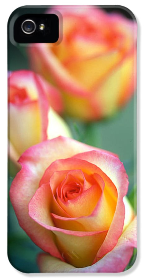 Florals IPhone 5 Case featuring the photograph Rose Trio by Kathy Yates