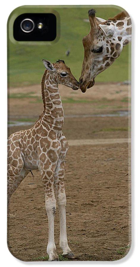 Mp IPhone 5 / 5s Case featuring the photograph Rothschild Giraffe Giraffa by San Diego Zoo