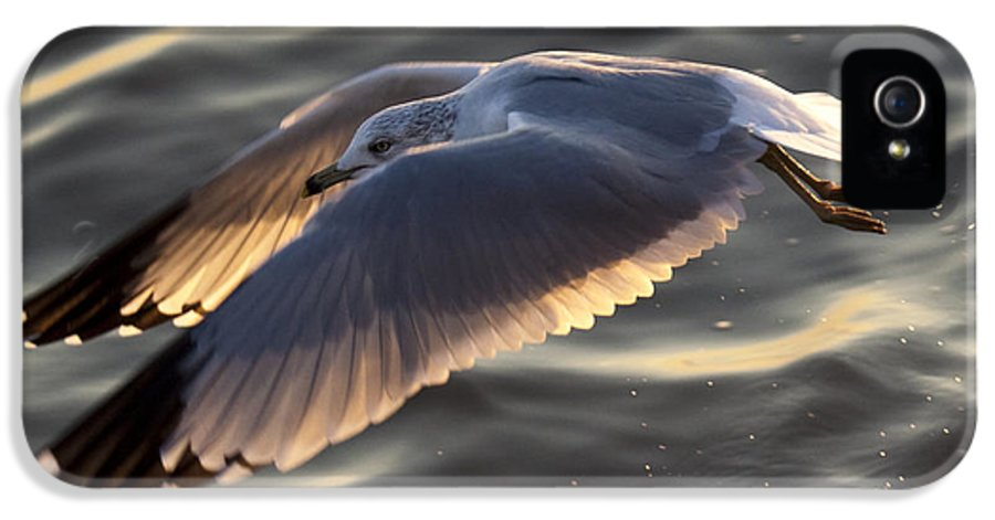 Seagull IPhone 5 Case featuring the photograph Seagull Flight by Dustin K Ryan