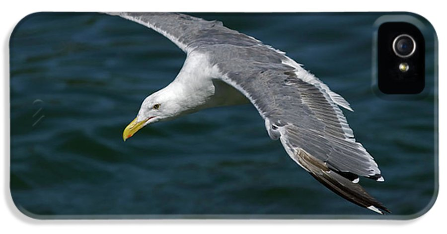Animal IPhone 5 Case featuring the photograph Seagull In Flight by Randall Ingalls