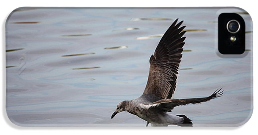 Wildlife IPhone 5 Case featuring the photograph Seagull Landing by Carol Groenen