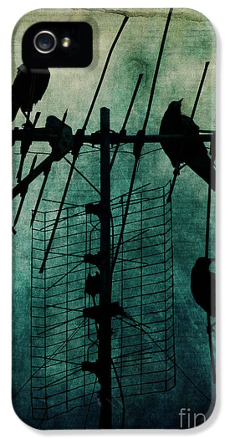 Crows IPhone 5 Case featuring the photograph Silent Threats by Andrew Paranavitana