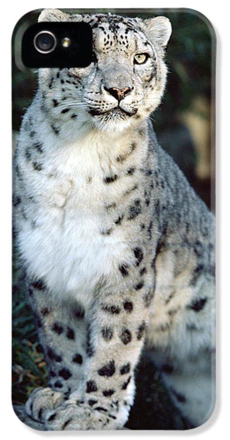 Mp IPhone 5 Case featuring the photograph Snow Leopard Uncia Uncia Portrait by Gerry Ellis
