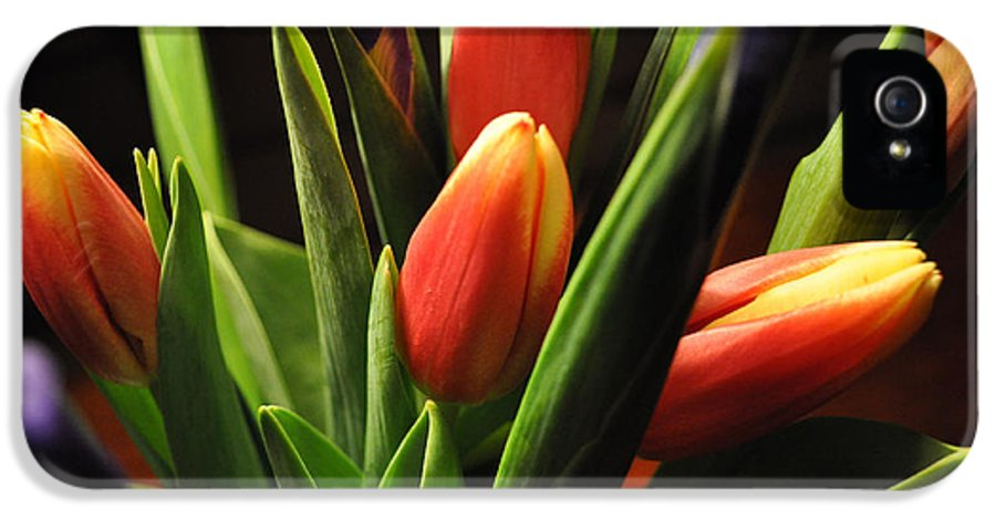 Flowers IPhone 5 / 5s Case featuring the photograph Soft Fireworks by Luke Moore
