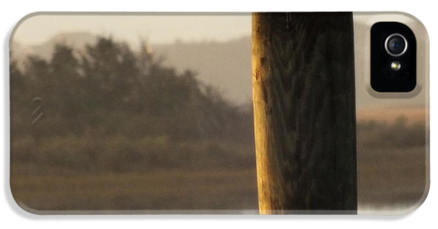 Seagulls IPhone 5 / 5s Case featuring the photograph Soft Mornings by Karen Wiles