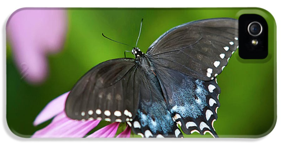 Black Butterfly IPhone 5 Case featuring the photograph Spice Of Life Butterfly by Christina Rollo