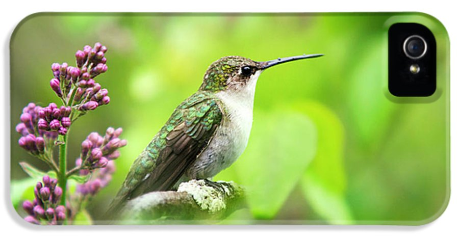 Spring IPhone 5 Case featuring the photograph Spring Beauty Ruby Throat Hummingbird by Christina Rollo