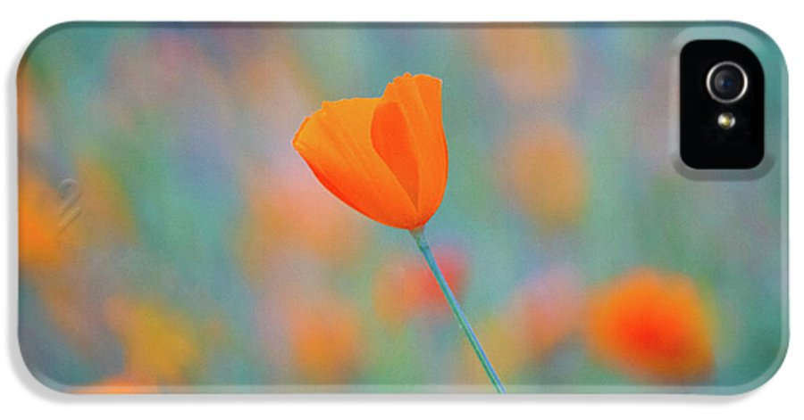 Sierra Nevada IPhone 5 Case featuring the photograph Spring Poppy by Anthony Michael Bonafede
