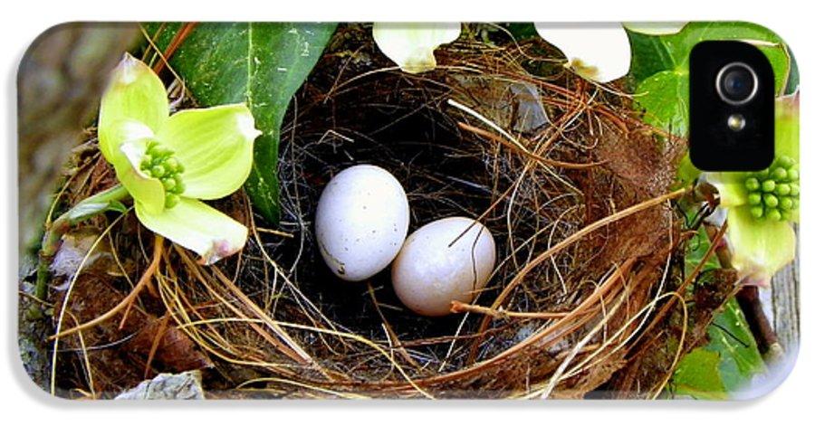 Bird Nest IPhone 5 Case featuring the photograph Springtime by Karen Wiles