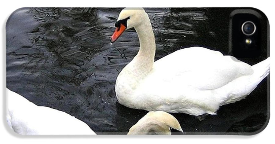 Swans IPhone 5 Case featuring the photograph Stanley Park Swans by Will Borden