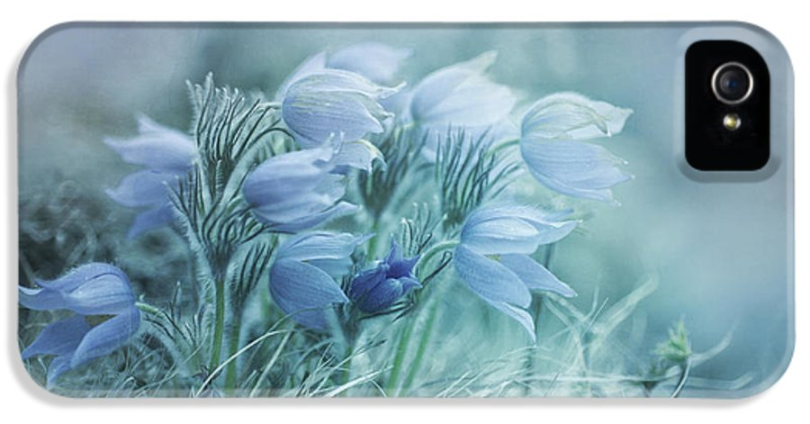 Pasque Flower IPhone 5 Case featuring the photograph Stick Together by Priska Wettstein