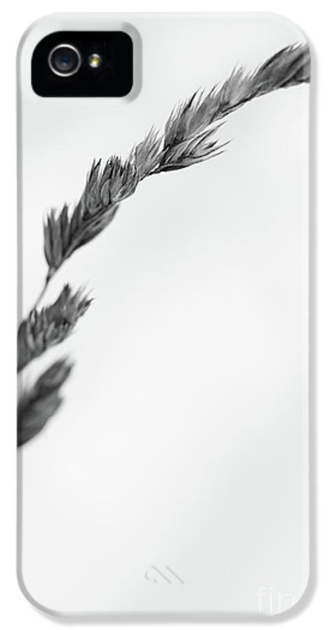 Dry IPhone 5 Case featuring the photograph Straw by Gabriela Insuratelu